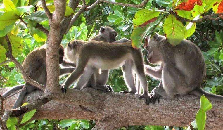 Hewan yang Masih Sering Dijumpai di Gunung  Jelajah Nusantara