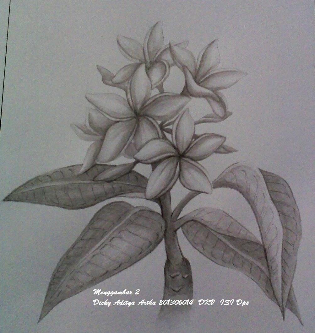 Gambar Sketsa Pensil Bunga Kamboja Informasi Seputar Tanaman Hias
