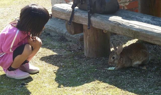 Okonusima la isla de los conejos