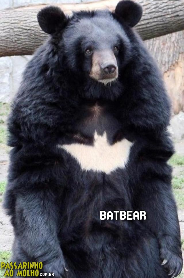 urso com marca do batman, batbear