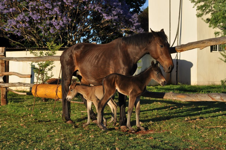 But recently, against staggering odds, a mare in Pretoria, South Africa ...