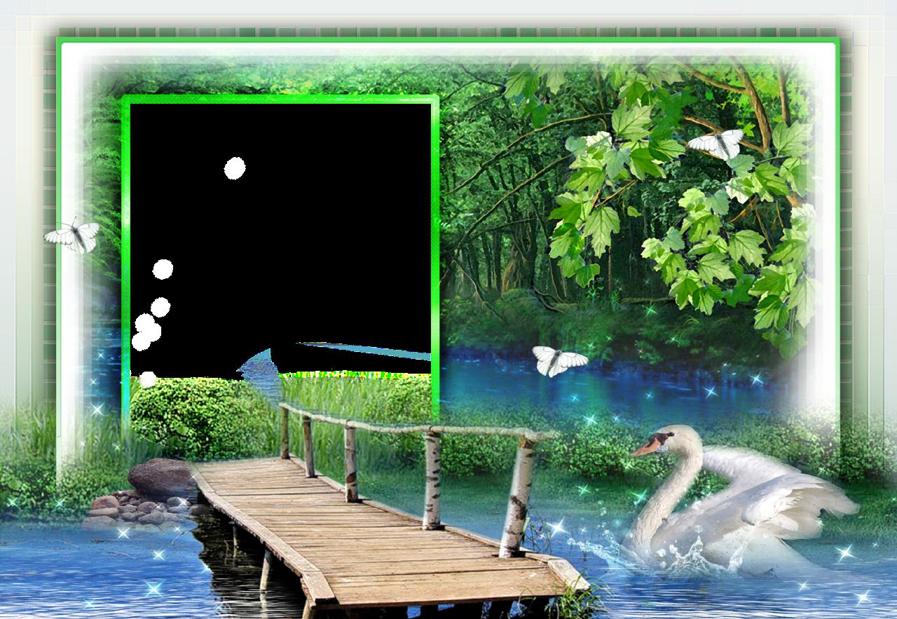 ForgetMeNot: swans frames