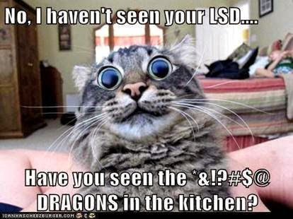 No, I haven't seen your LSD... Have you seen the '&!?#$@ DRAGON in the kitchen? cat meme