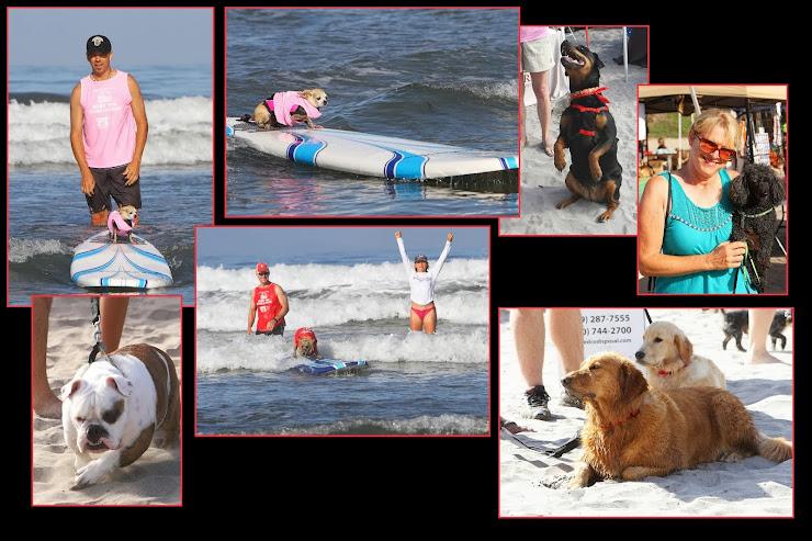 Surf Dog Surf a Thon 2013