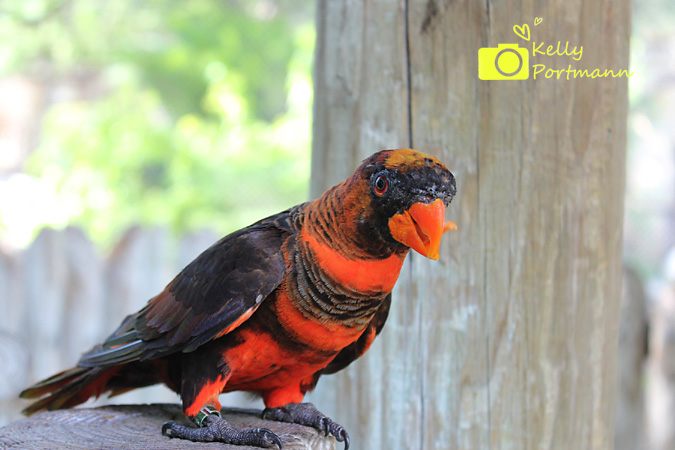 San Antonio Photographer, San Antonio Zoo, Pretty Bird, Zoo Coupons
