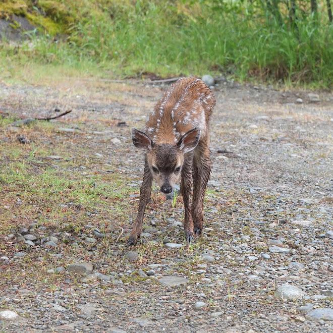 Bambi pleads