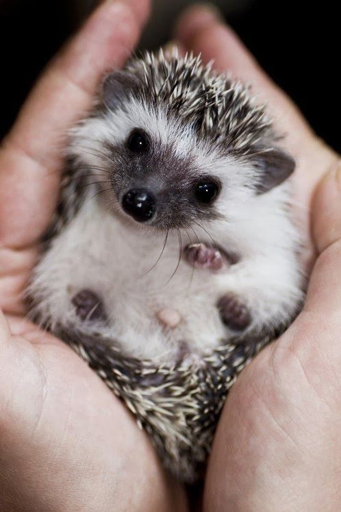 5 Best Small Pets to Consider for Your Child