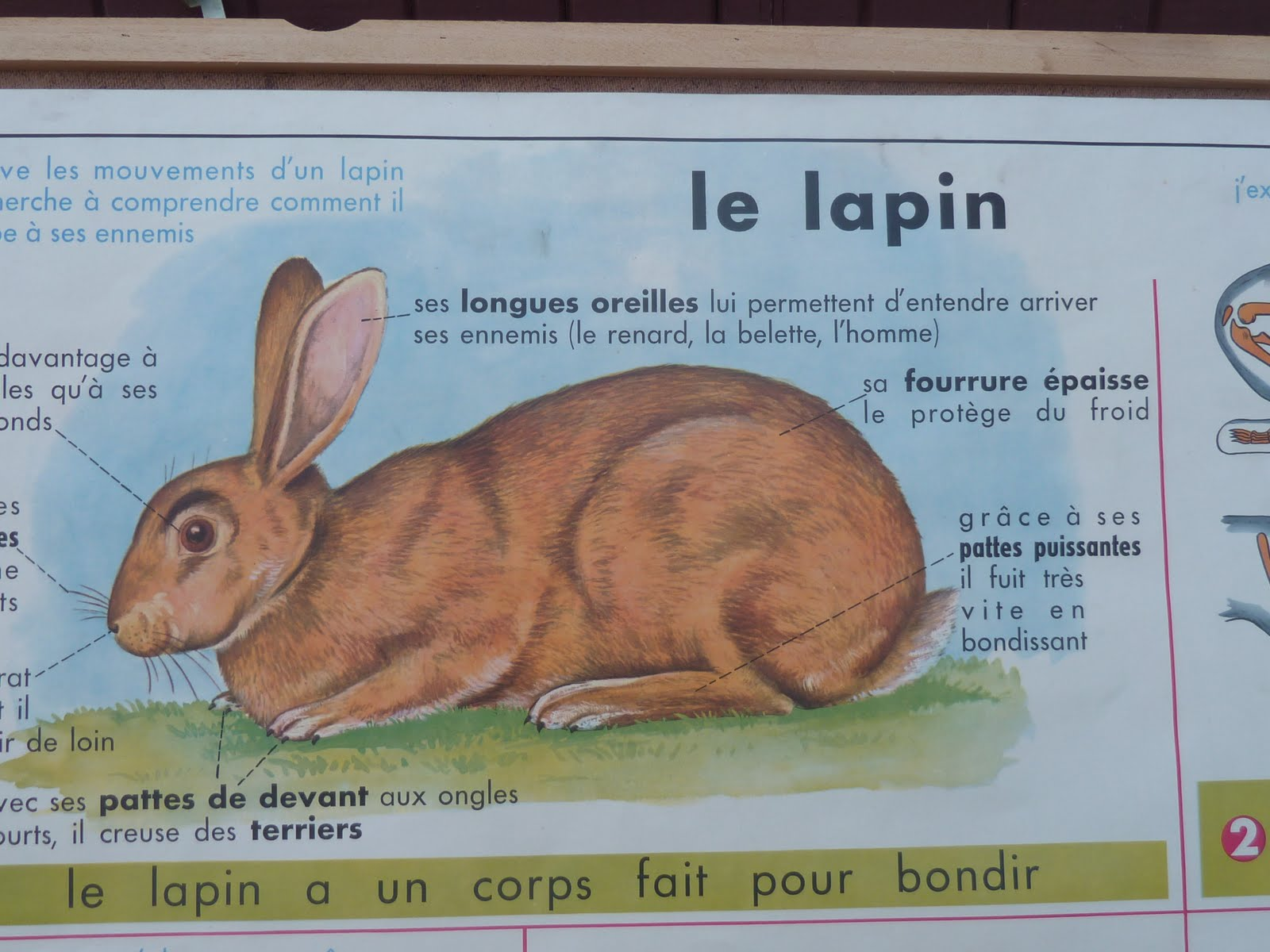 Vintage French Posters Botany Animals Anatomy Old World Maps From