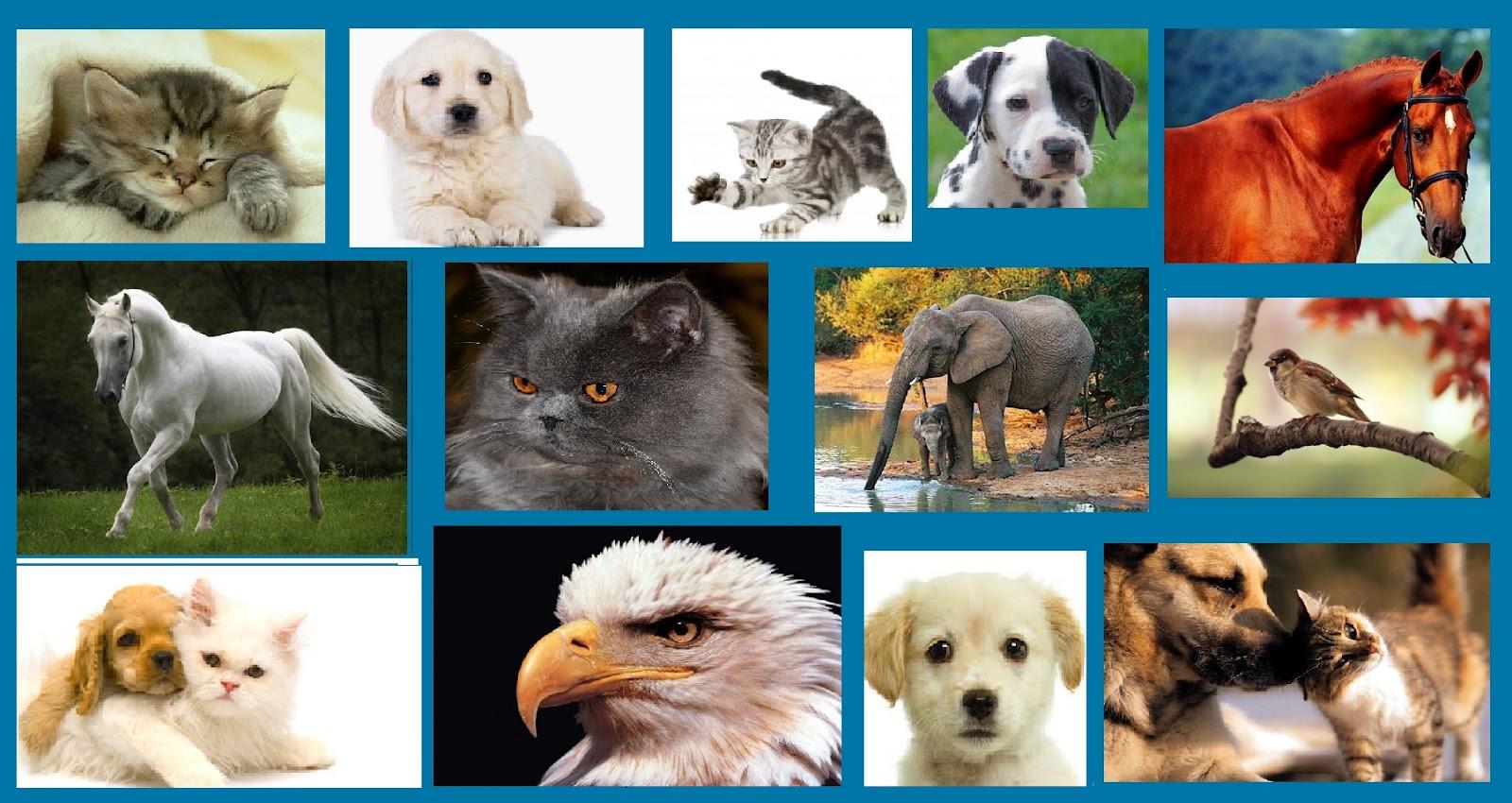 Seiva: Todos os animais merecem o céu
