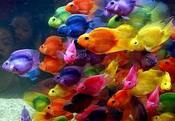 Peces multicolor