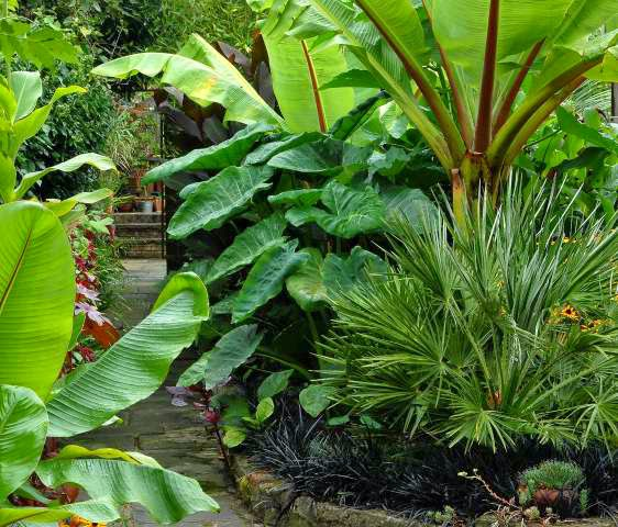 Making a cool tropical gardens in the front yard for Ideas for front yard plants