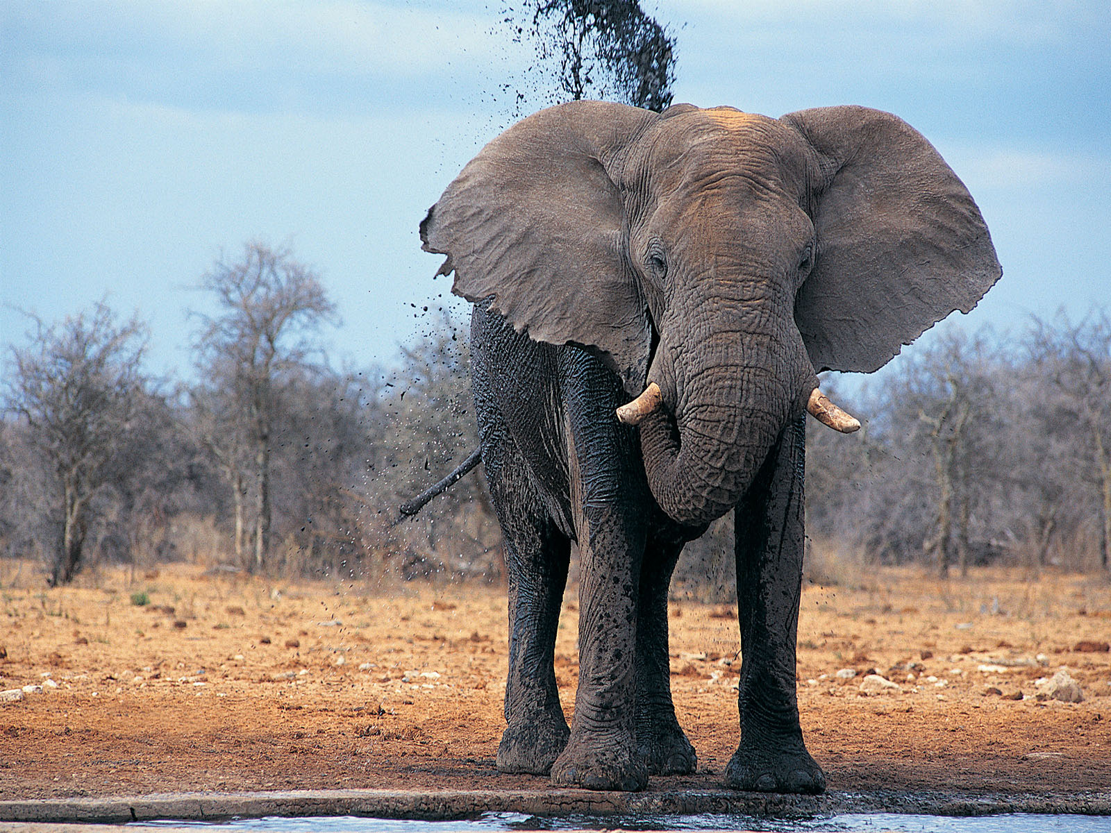 Elephants are a symbol of wisdom in asian cultures and