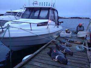 båten med godfangst