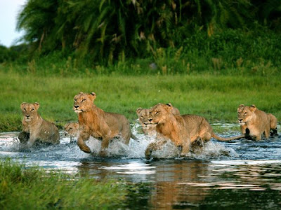 Lion Group Picture