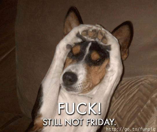 Funny Animals With Sayings still not Friday