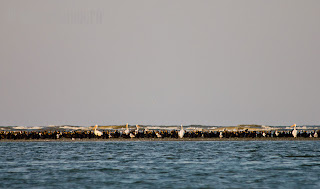 Golful Musura