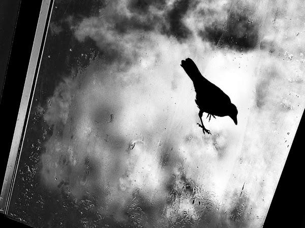 Zehra Gümüş. Fotografía | Photography