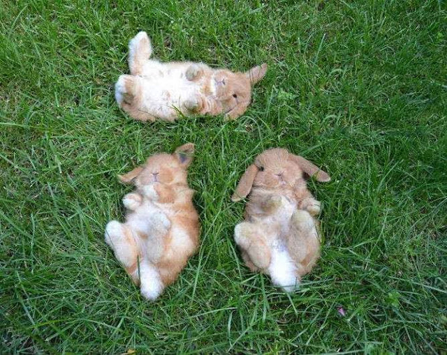 Funny animals of the week - 22 November 2013 (35 pics), three slepping bunnies