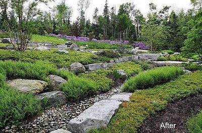 woodland inspiration skogsbryn växter trädgårdsdesign
