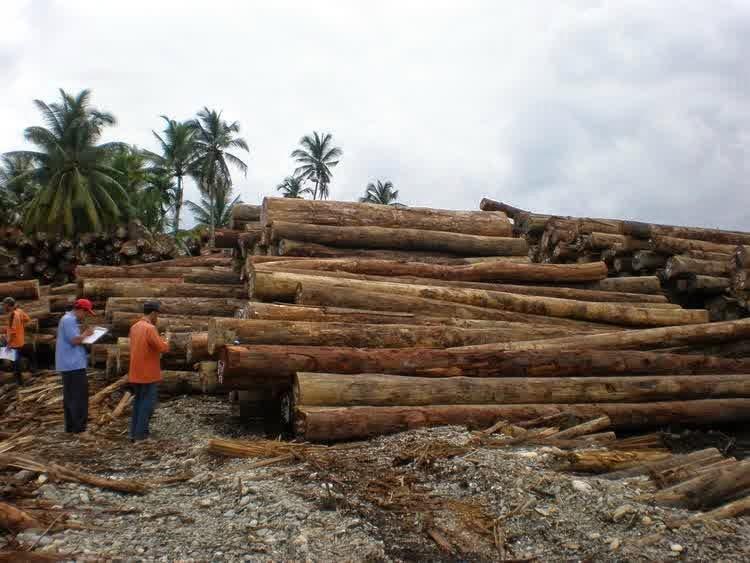 kayu jati siap jual ke pengrajin mebel