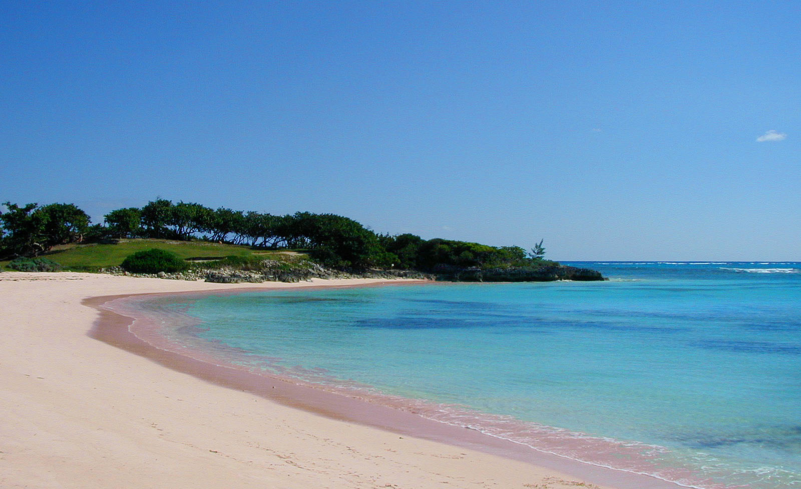 Pink sands beach free stockphoto for Pink sand beaches bahamas