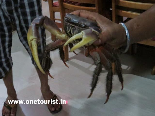 crab , sea food in andaman , केकडा अंडमान में