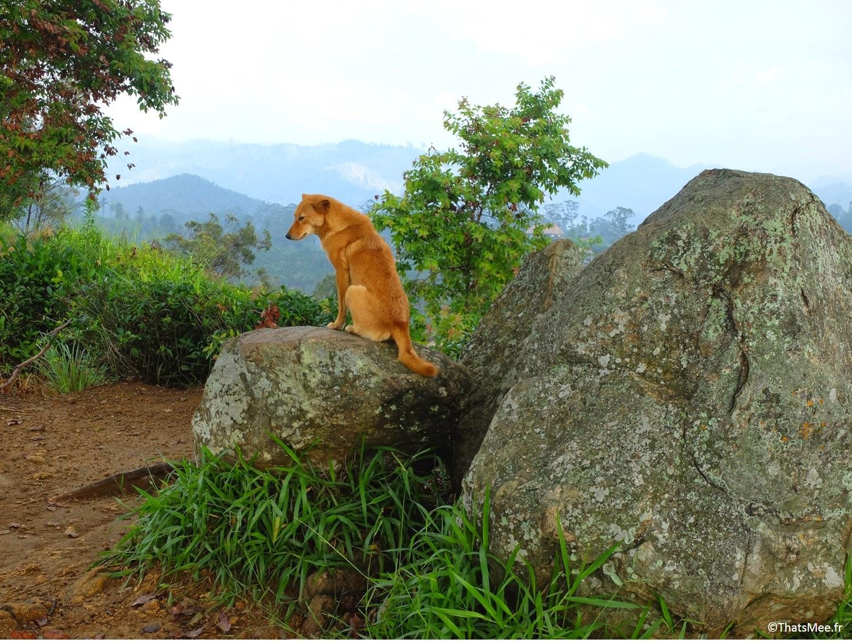 Small Adam's Peak chien Sri-Lanka