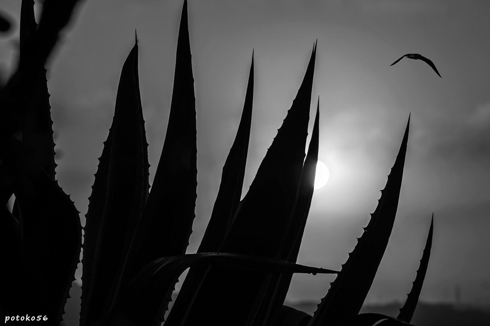 amanece en Rota tras las hojas de pita