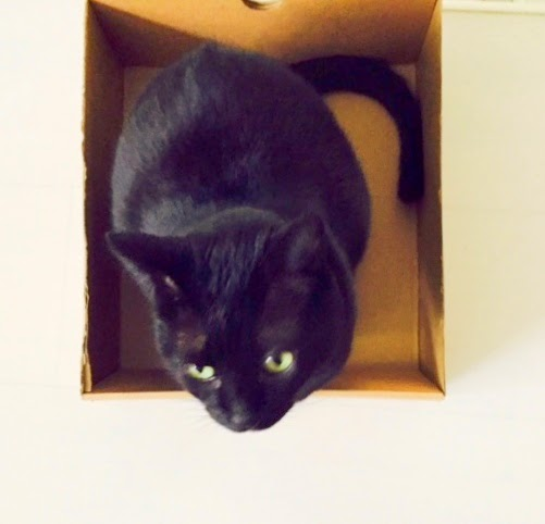 Cats Cardboard Boxes Wired