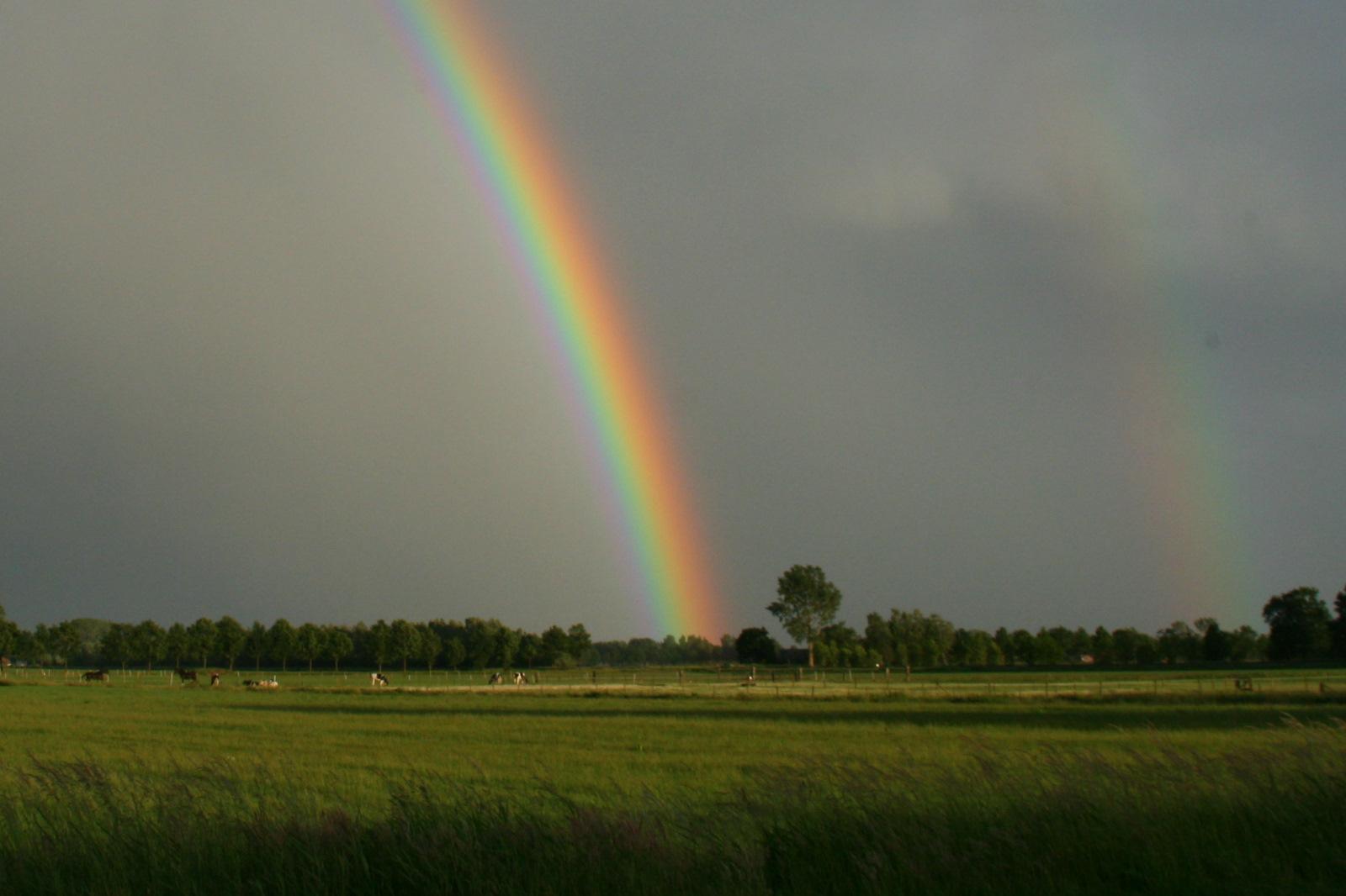 Carpe Diem Alle Kleuren Van De Regenboog