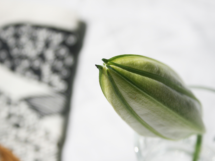 A lily flower for nature in the home series | FloorNumberFour. blog
