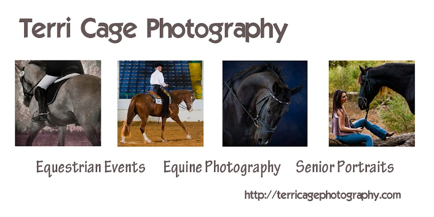 Terri Cage Photography: Preparing Your Horse For Photos