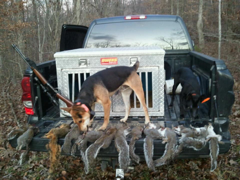 Squirrel Hunting Dogs For Sale In Tennessee