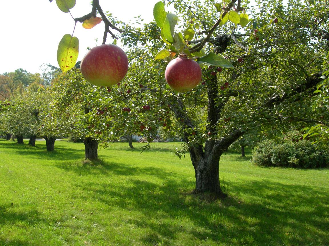 Achieving your financial freedom one quarter at a time for Elenco alberi da frutto