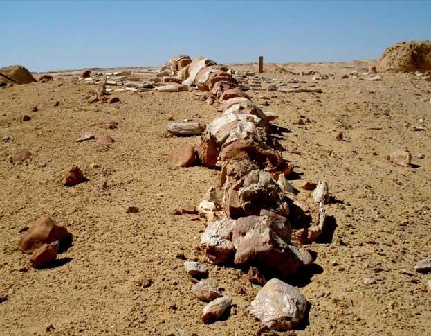 Wadi Al Hitan Whale Valley