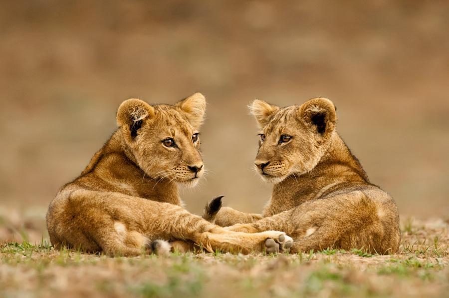 Cute wild baby animals - photo#27