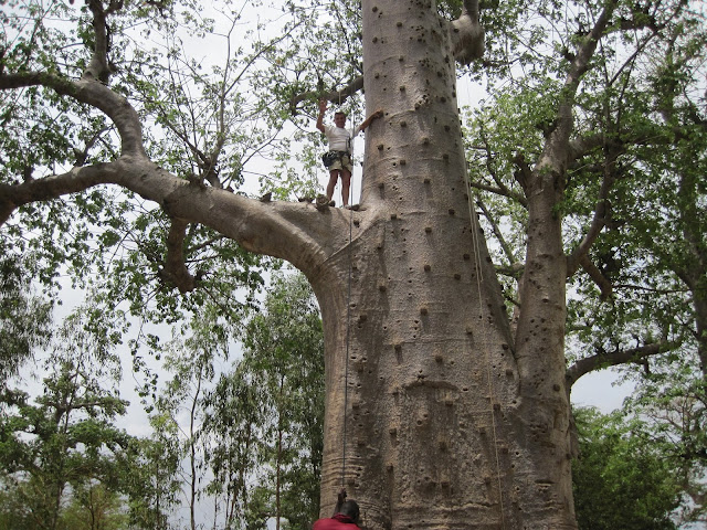 Accrobaobab Adventure (Senegal)