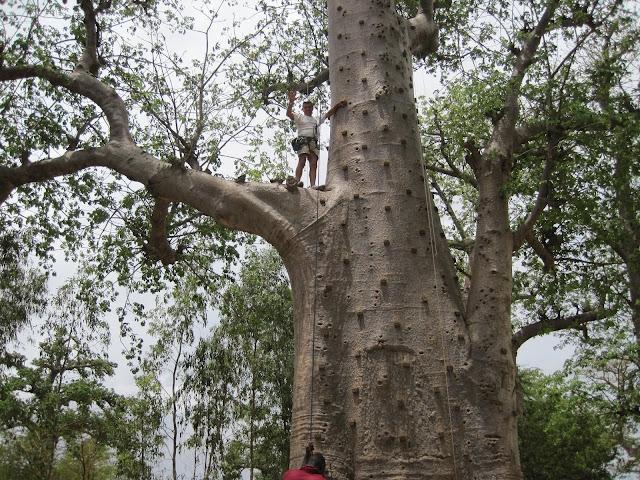 IMG_3341 ▷ La Reserva de Bandia y Accro Baobab Adventures