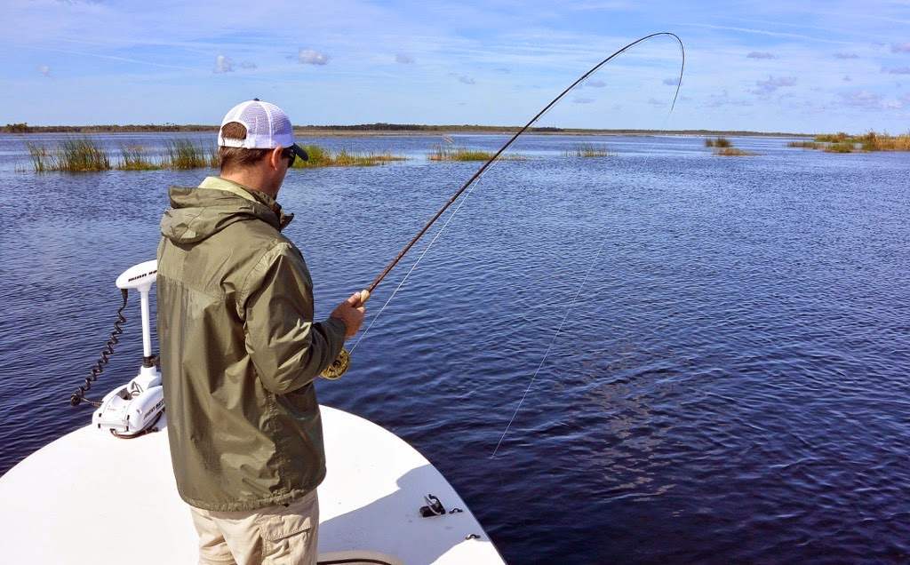 bent rod fly fishing shad florida