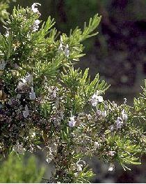 Le jardin de pascaline recette du mardi - Congeler les haricots verts du jardin ...