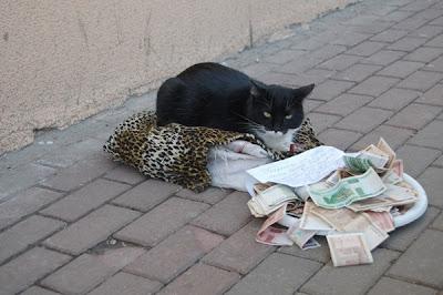 gambar kucing mengemis