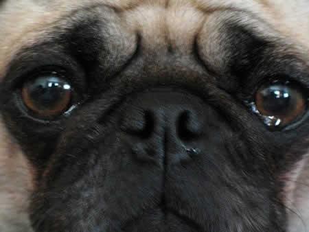 Flood Kingdom~ - Página 40 Petrede-cachorro-chorando-lagrimas