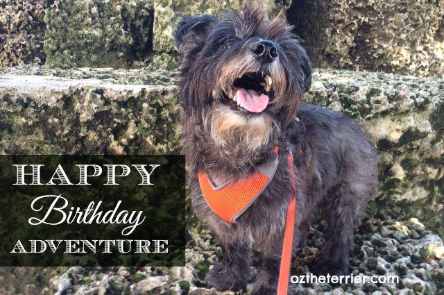Oz the Terrier celebrates his 11th birthday at Coral Castle in Miami, FL