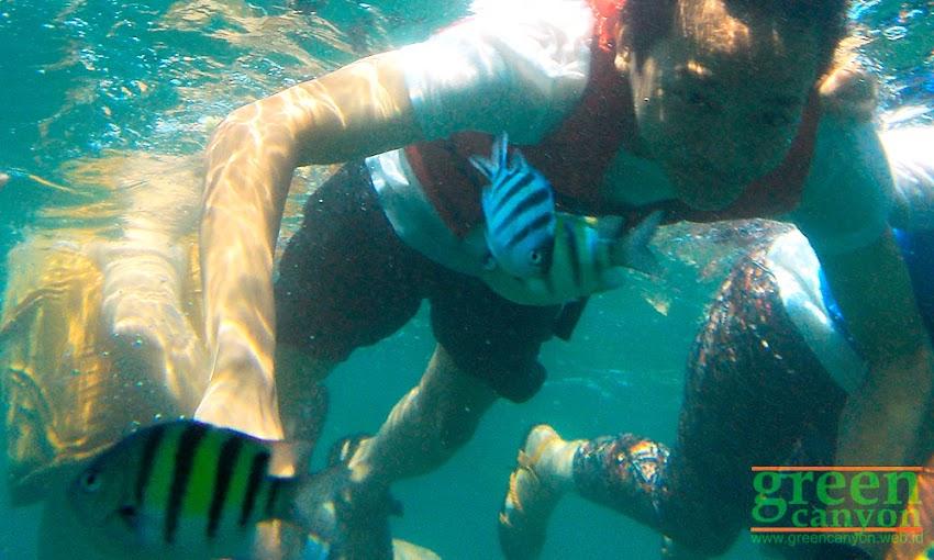 Snorkeling di Taman Laut