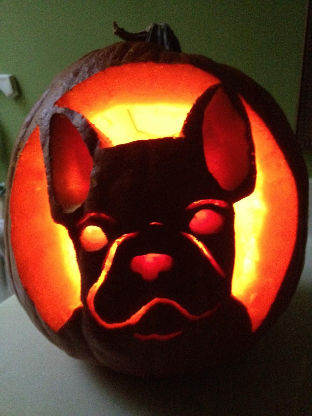 bulldog pumpkin pic 6 aaxoowkl educationadda info u2022 rh 6 aaxoowkl educationadda info