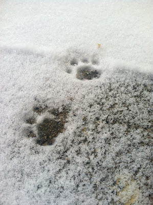 cat paw prints in snow