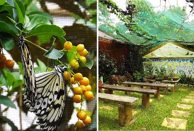 Mango Tours Tagaytay Paradizoo bee farm