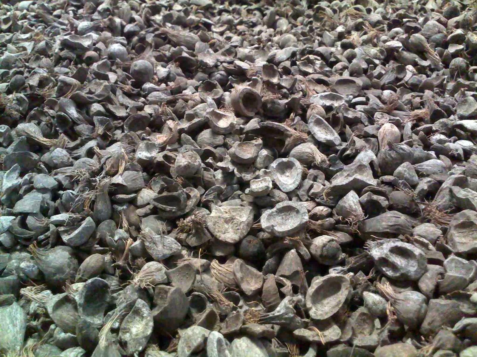 cangkang sawit