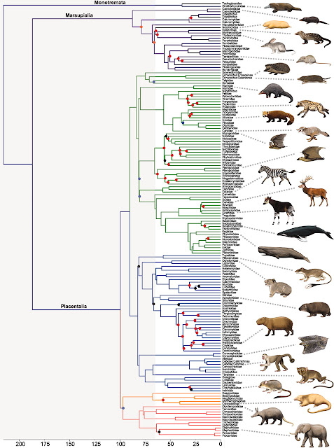 """evolution of mammals cat family Ancient cat may reshape feline family tree """"it's given us a new part of the world to look at for the evolution of the big cat many mammals —including."""