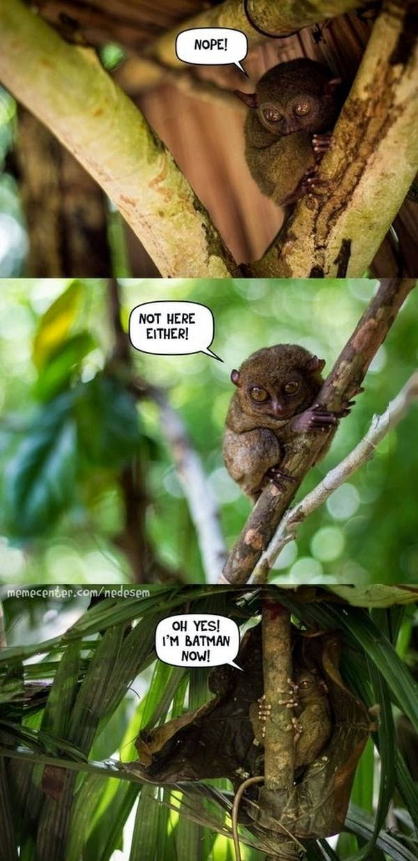 30 Funny animal captions - part 22 (30 pics), animal meme, funny captions, animal pictures with captions